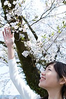 Woman looking up and touching cherry flowers, side view, Japan