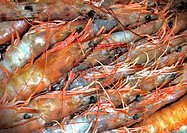 background, CLOSE, close-up, crustacea, detail, drink