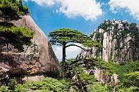 Trees on a mountain, Huangshan Mountains, Anhui Province, China