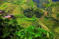 High angle view of terraced rice fields, Jinkeng Terraced Field, Guangxi Province, China