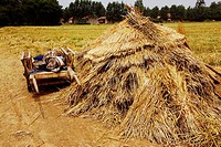 Cart near a haystack in a field, Zhigou, Shandong Province, China