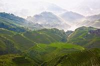 High angle view of terraced fields, Jinkeng Terraced Field, Guangxi Province, China