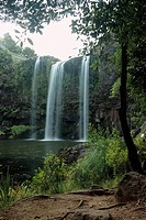 New Zealand _ North Island _ Northernland _ Whangarei Falls