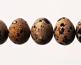 Lined Quail Eggs, Front View, Close Up