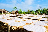 Vietnam _ The South _ The Delta of Mekong _ Can Tho _ Gastronomy _ Rice crepes fabrication