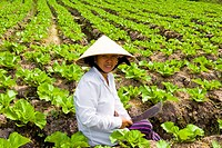 Vietnam _ The South _ The Delta of Mekong _ Can Tho Region _ Thot Not _ Culture