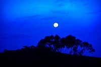 Moon rising over trees on a hill