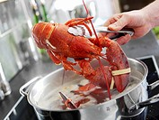 Taking cooked lobster out of water