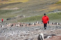 Antarctica, South Shetlands Islands, Aitcho Island, Tourist at Penguin colony. MR.