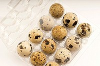 High angle view of quail eggs in a egg carton