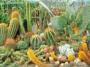 different cacti and succulents