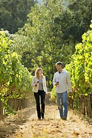 Man and woman walking in vineyard, Napa Valley, California, USA