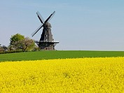 Mill in agriculture landscape, Söderslätt, Skåne, Sweden