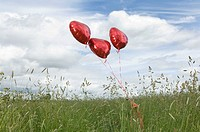 Heart shaped balloons in field