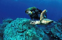 diver with turtle, Thailand