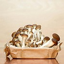Mushrooms in paper box, close_up