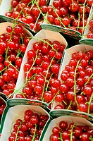 Redcurrants for sale at La Boqueria market, Barcelona. Catalonia, Spain