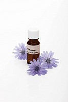 Bottle with Bach Flower Stock Remedy, Chicory Cichorium intybus