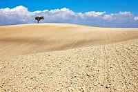 Rural landscape. Sevilla province, Andalucia, Spain
