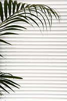 Plant against blinds