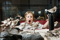 Boy looking at stuffed birds in museum