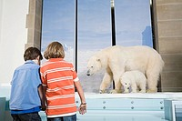 Boys looking at polar bears in a museum (thumbnail)