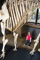 Girl looking at an elephant skeleton
