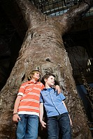 Boys standing by a tree trunk in a museum
