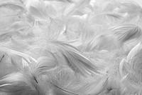 Feathers bw background