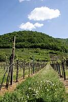 Weinanbau in der Wachau