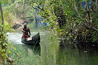 The backwaters of Kerala have a unique ecosystem - freshwater from the rivers meets the seawater from the Arabian Sea in the backwaters in Kerala. The...