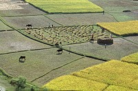 PLANTATION RICE Aerial view on rice paddies of the valley of Kathmandu in Nepal, near Bodhnath.