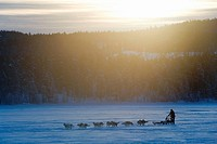 Dog Sledge in winter. Jokkmokk, Northern Sweden