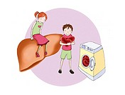 LIVER, DRAWING Two children explaining : ´The liver washes the blood to remove the impurities´ This image is part of a series of drawings explaining h...
