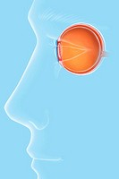 EYE, DRAWING Anatomy of the eye on a masculine silhouette. See. images 1009007 for the anatomy of the eye, 1009407 and 1009507 on a feminine silhouett...