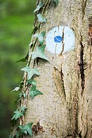 Marker painted onto tree trunk, close-up