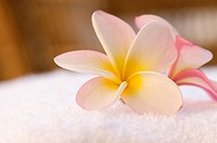 Plumeria flowers on bath towel