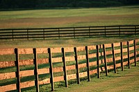 Fences in a pasture