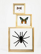 Three different framed insects