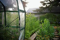 Greenhouse and garden at morning