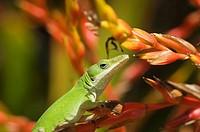 Lizard on leafs