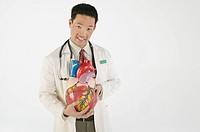 Doctor holding model heart