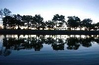 Row of Trees Reflected in Water at Dawn, Lincoln Park, Chicago