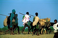Ethiopia, Bahar Dar, towards market, young boys and donkeys