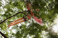 Chinese kite caught in tree