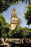 Patio de los Naranjos (orange tree courtyard) and minaret tower of the Great Mosque, Cordoba. Andalusia, Spain