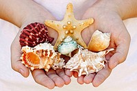 Seashells in hands