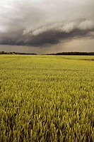 campaign, wheat field under cloud