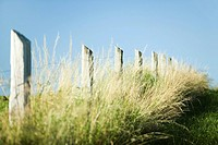 Fence in tall grass
