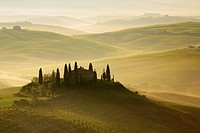 Cypress, Italian Cypress, Cupressus sempervirens, Zypresse, vineyards, country house, farm house, hill countryside, misty atmosphere, spring, agricult...
